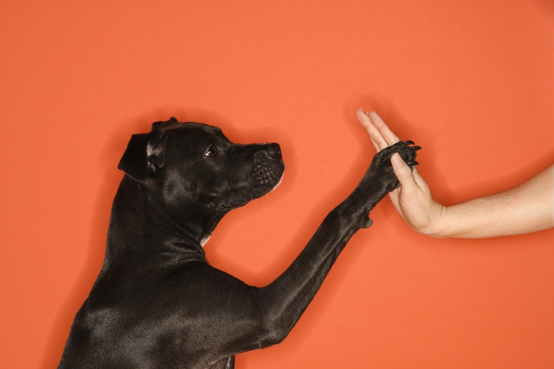 210017-dog-giving-woman-high-five